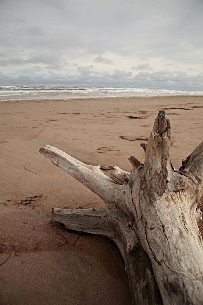 TRONCO-toscana-spiaggia-682x1024